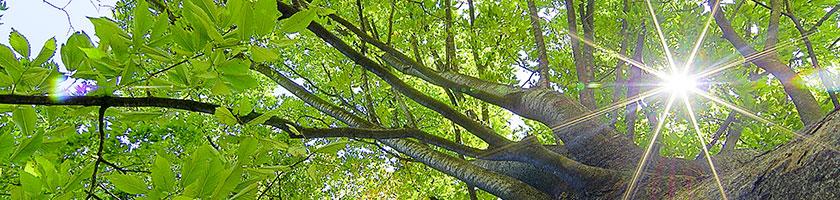 木と水を使わないストーンペーパー